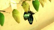 «От куколки – к бабочке!»
