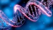 Здоровье, омоложение и ДНК